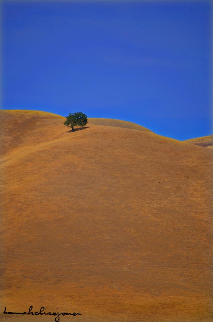 Marin Hills 2