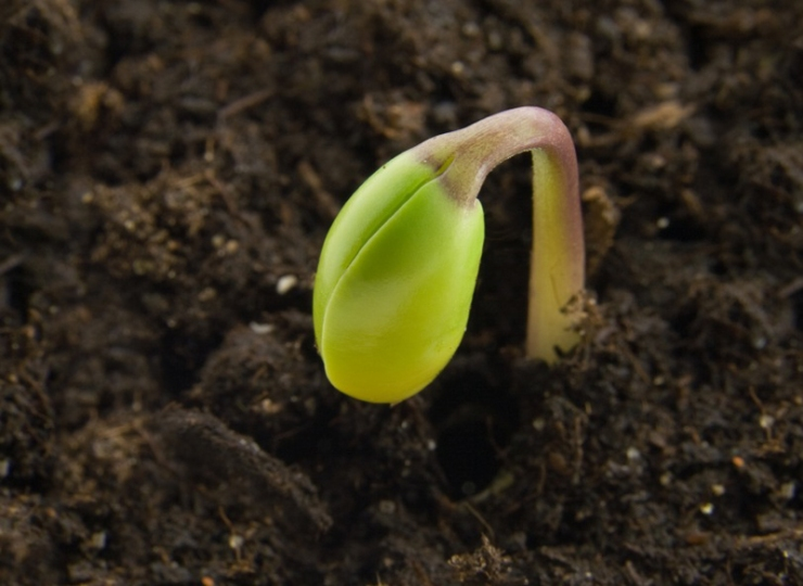 Seed-germinating